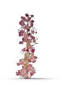 BotanicalsPage_26_480x480_2845bb27-0eeb-4a19-834f-2e3c416bcd66_large